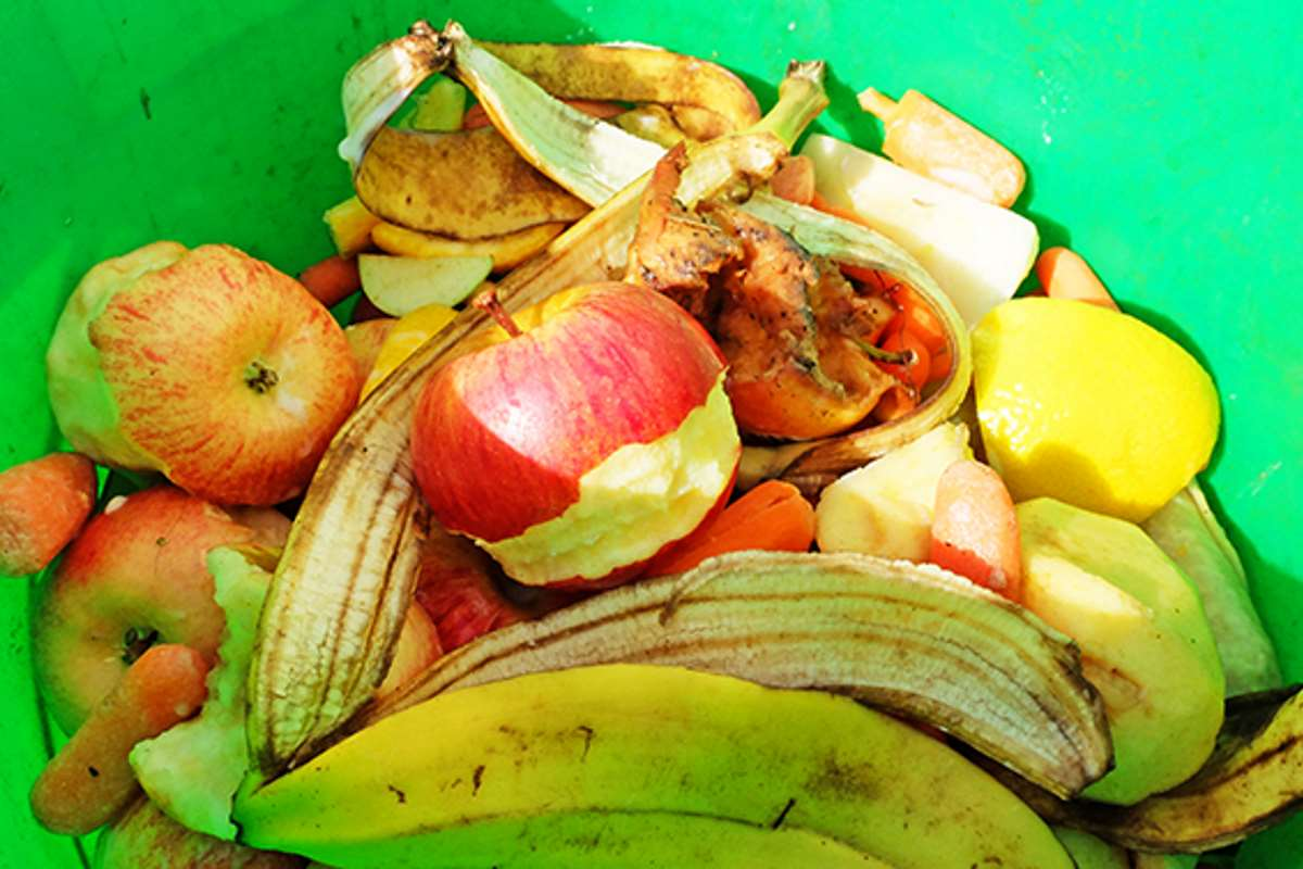 bananas, apples, and other food waste in a green bucket