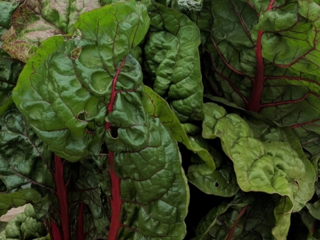 healthy soils program funding, chard greens
